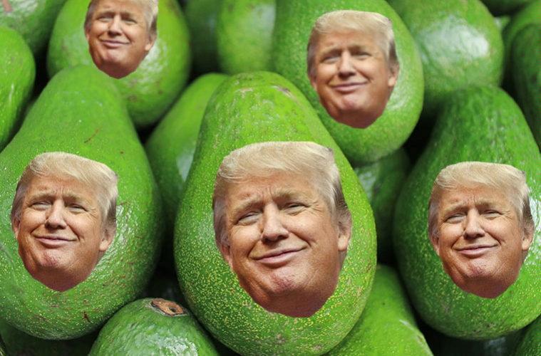 Save The Guacamole! Avocados Under Siege…